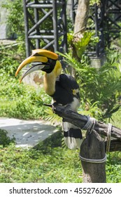 Yellow Billed Hornbill Great hornbill, Great indian hornbill, Great pied hornbill, Hornbill, Focus through the cage, Selective focus