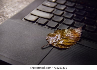 yellow birch leaf on the laptop keyboard