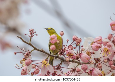 Yellow bird on pink blossom bouquet