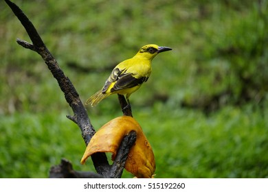 A yellow bird on a tree branch