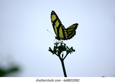 Yellow and black butterfly on a flower