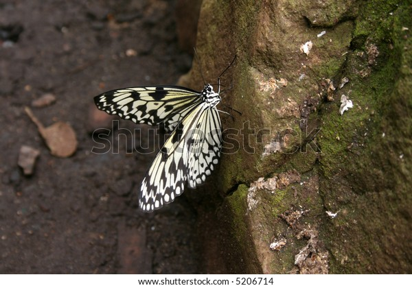 Yellow and black butterfly on a rock