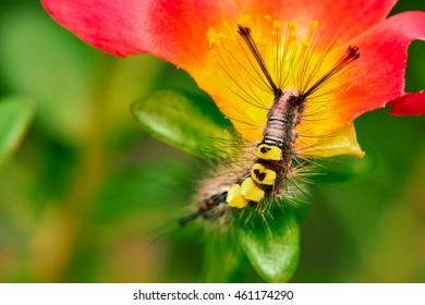 Yellow and Black Caterpillar