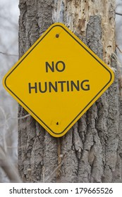 A yellow and black diamond shaped road sign on a tree with the words NO HUNTING making a great concept.