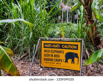 Yellow and black sign caution elefants in the jungle.