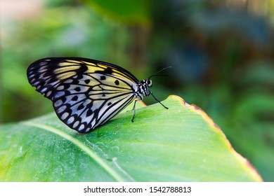 yellow black and white butterfly sitting on a big green leaf