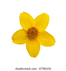 Yellow bloom isolated on white