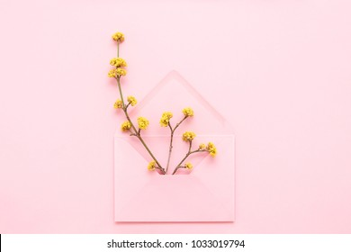 Yellow blossoming branches in pink envelope on pink background. Hello spring concept. Top view, greeting card.