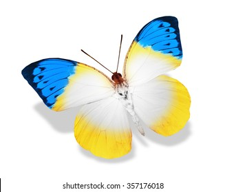 Yellow blue butterfly, isolated on white