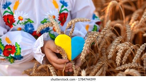 A yellow and blue heart and spikelets of wheat in the hands of a child in an embroidered shirt ( vyshyvanka). Wheat field at sunset. backlightю Ukraine's Independence Day