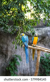 Yellow and blue Macaw at a zoo
