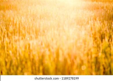 yellow bokeh background in the morning sun