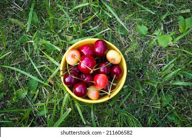 Yellow bowl with sweet cherries on a grass