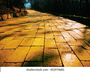 Yellow brick path with dramatic shadows