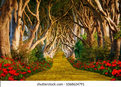The yellow brick road leading into a scary forest. See the faces in the trees!