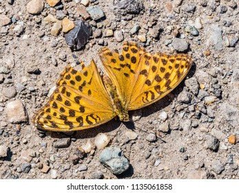 yellow brown butterfly on the ground