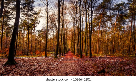 Yellow brown leaves of a beech tree in the forest during fall
