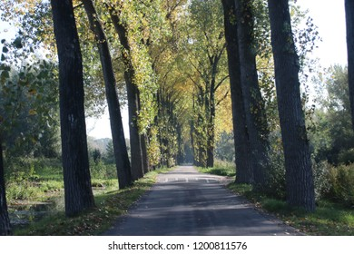 Yellow and brown leaves on the street and at trees on road at park Hitland in Nieuwerkerk aan den IJssel during the autumn season in the Netherlands