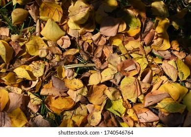 El color amarillo, el marrón y el naranja de las hojas de otoño. Al aire libre. Colorida imagen de fondo de hojas caídas de otoño perfecta para uso estacional.