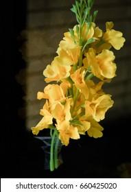 YELLOW BURMA PADAUK (PTEROCARPUS MACROCARPUS)