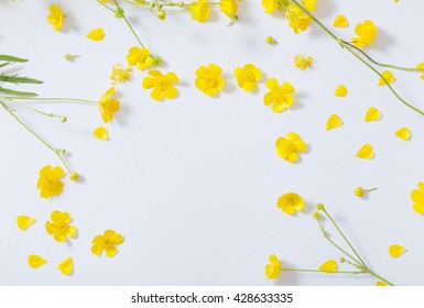 yellow buttercups on white background