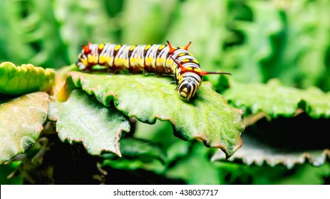 yellow butterfly caterpillar or worm crawling on leaves