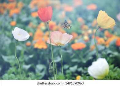 Yellow Butterfly with Colorful Flowers on Colorful Blur Background.