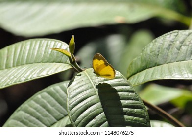 Yellow butterfly and leafs like wings