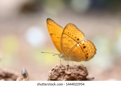 yellow butterfly in national park thailand