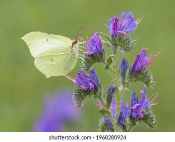 Yellow butterfly on the blue flower - Shutterstock ID 1968280924