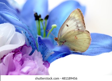 yellow butterfly on flowers