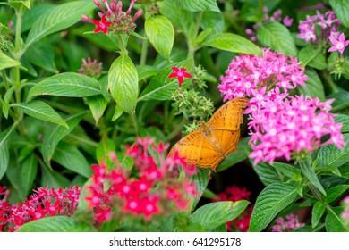 Yellow butterfly on flowers, butterfly in garden.