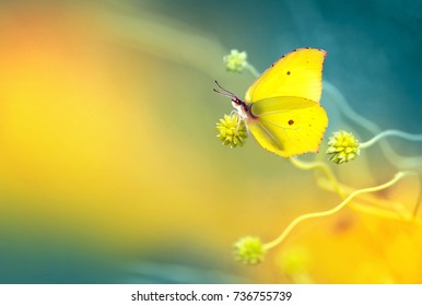 Yellow butterfly in an ornate wavy plant on a yellow and turquoise background in spring in nature in the open air close-up macro. Template for text.