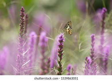 Yellow butterfly pearched on purple lavender flower with beautiful purple foreground