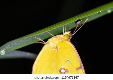Night Butterflies Images Stock Photos Vectors Shutterstock