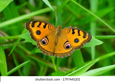 The yellow butterfly spread wide wings on the grass, showing the beautiful colors of the wings above