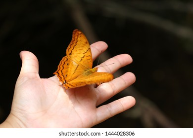 yellow butterfly stand on the hand