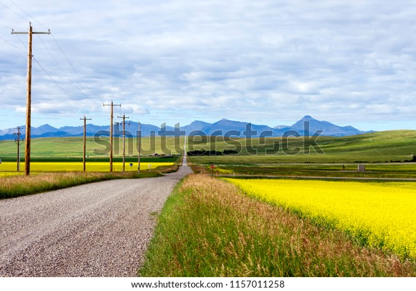 Yellow canola field in bloom with a country road and the Canadian Rockies in the background near Pincher Creek, Alberta, Canada.