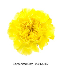 Yellow Carnation Flowers Images Stock Photos Vectors Shutterstock