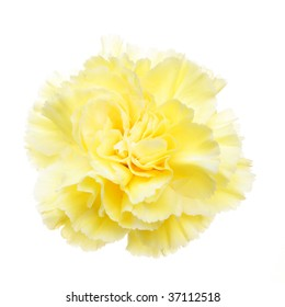 Yellow carnation flowers images stock photos vectors shutterstock yellow carnation flower isolated on white mightylinksfo