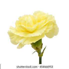 Yellow carnation flowers images stock photos vectors shutterstock yellow carnation on white mightylinksfo