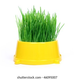 Yellow cat bowl with green grass