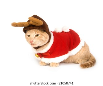 A yellow cat with a Christmas costume