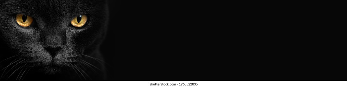 Yellow cat eyes on a dark background. Cat look. face with yellow eyes. horizontal banner with space for text.