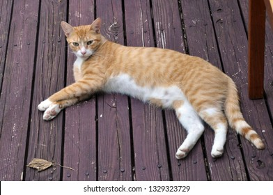 Yellow Cat lounging on a Deck