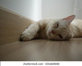 Yellow cat sleeping