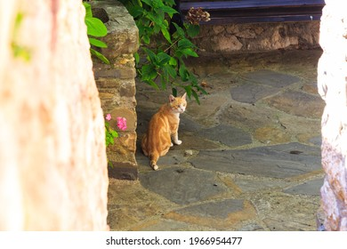 Yellow cat with white stripes staring in patio with stone floor