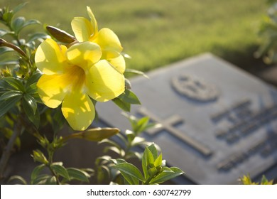 yellow cemetery flowers in graveyard