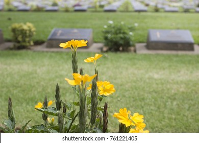 yellow cemetery flowers in the graveyard