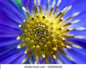 Blue Flowers With Yellow Center Images Stock Photos Vectors